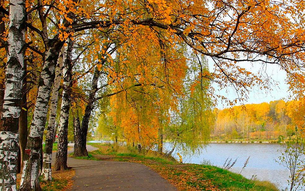 Осеннее дерево без листьев картинка свиную