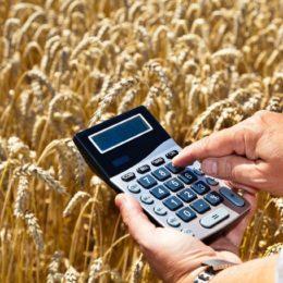 В Оренбуржье 1100 сельхозпроизводителей претендуют на субсидии по растениеводству
