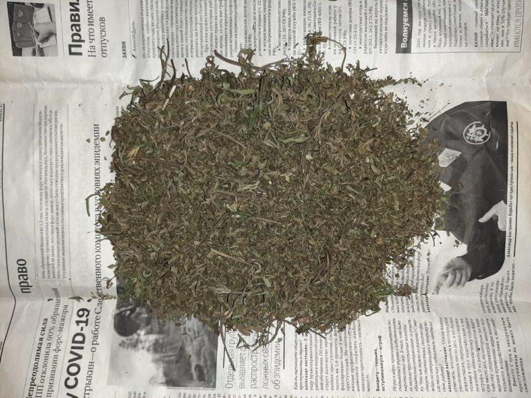 Как сделать химка для конопли чернобыльская конопля