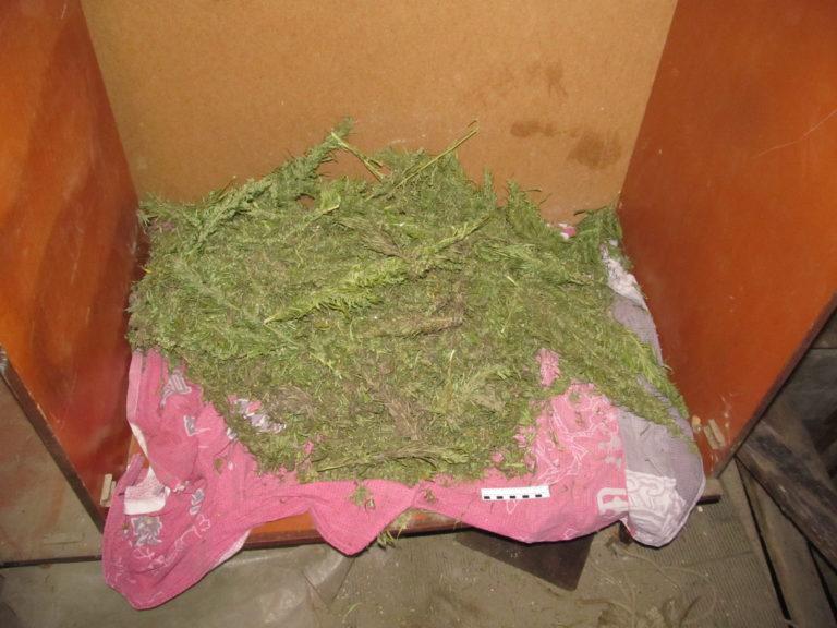 Изъяли 2 кг марихуаны продажа конопли в кривом роге