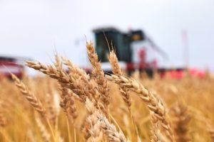 Оренбургские аграрии получат господдержку на 3 миллиарда рублей